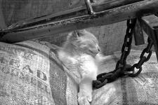 kittybw4x61